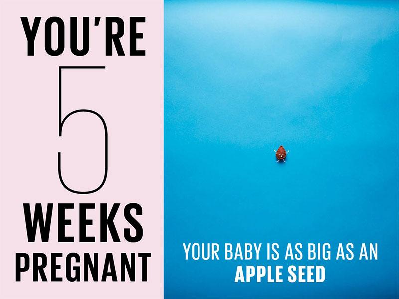 Cẩm nang mẹ bầu: Mang thai tuần thứ 5 – Bảo Hà Spa